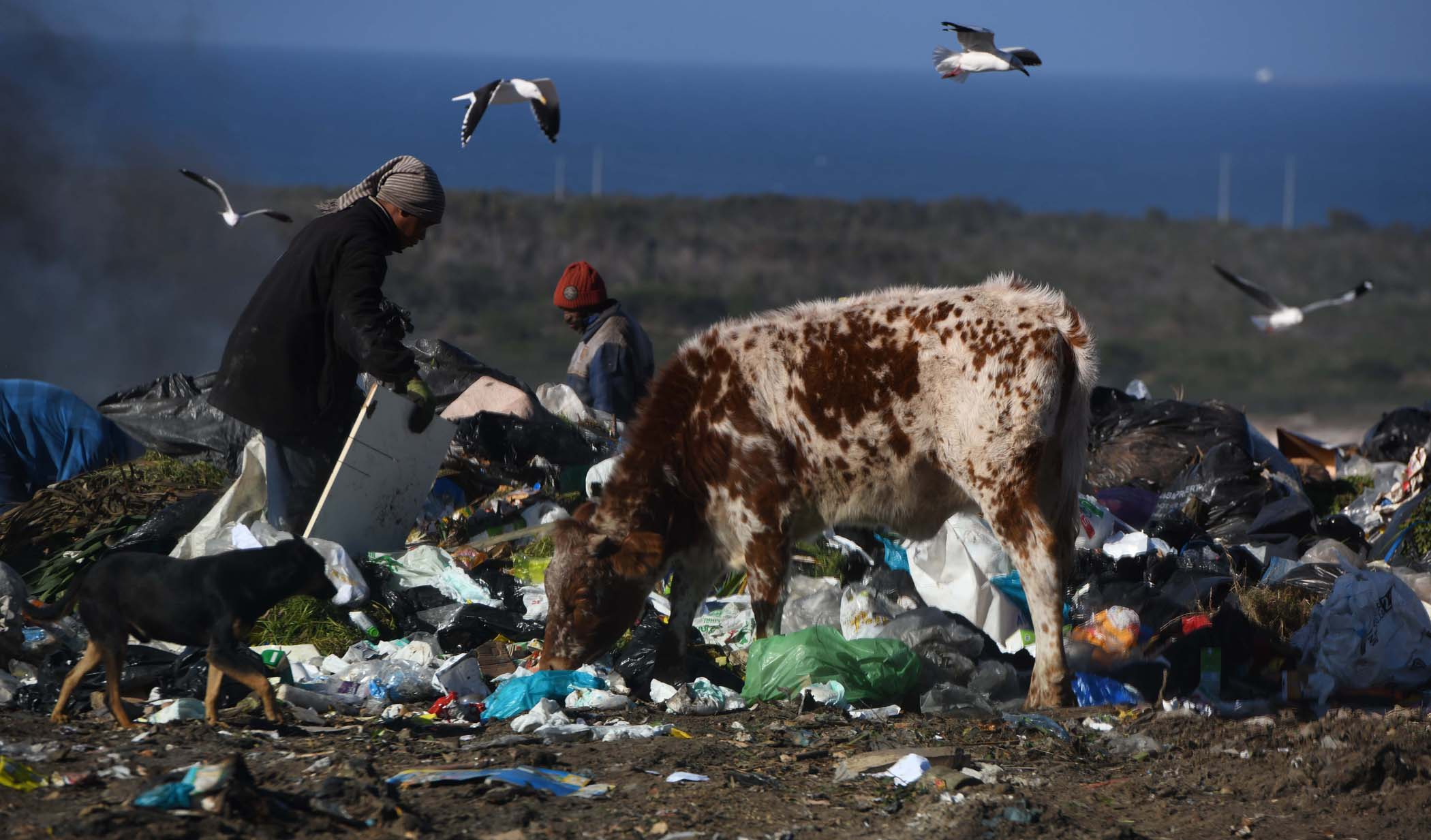 Hundreds of waste pickers spend their days at landfill sites in Nelson Mandela Bay rummaging through mountains of garbage often with bare hands. PHOTO: Black Star/Spotlight
