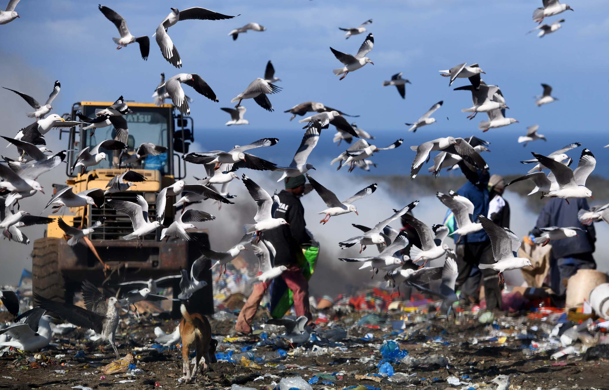 Scavenging for food and valuables among seagulls. PHOTO: Black Star/Spotlight