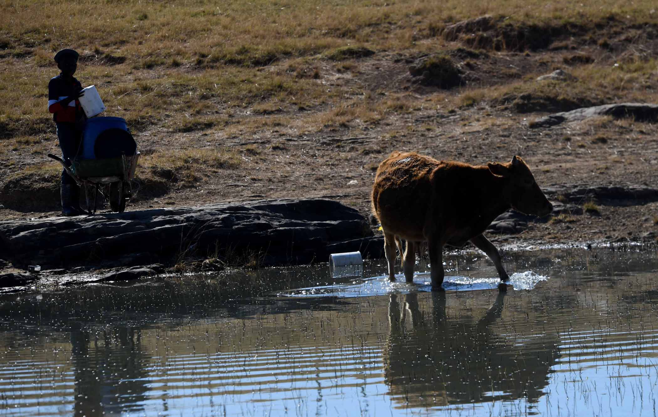 Inadequate water infrastructure and unreliable services to rural communities in the Eastern Cape, mean many people and livestock share the same open water source. PHOTO: Black Star/Spotlight