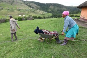 The sick often have to be transported in wheelbarrows to get medical help if ambulances do not arrive. PHOTO: Black Star/Spotlight